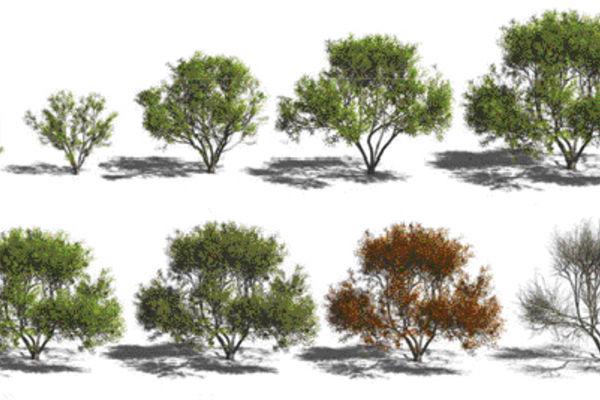 Logiciel Simulation De Croissance De Plantes Cahiers