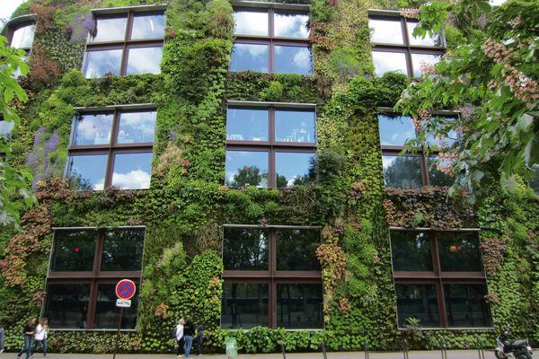 Le jardin vertical du quai Branly prend racine - Cahiers Techniques ...